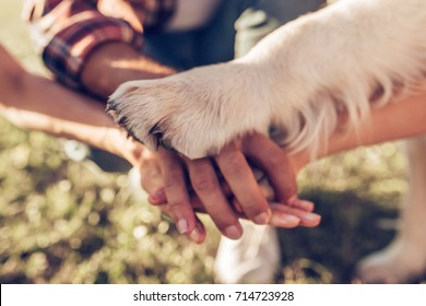 Hands and paws of all family members. Father, mother, daughter and dog are taking hands together