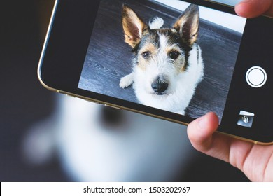 Hands photographing a dog on a mobile phone. A serious puppy looks directly at the camera against a wooden background, taking a selfie on a smartphone or camera. View through smartphone display