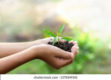 Hands are planting the seedlings into the soil. Earth day and World environment day concept