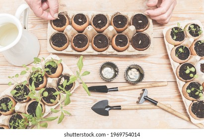 Hands Planting The Seeds Into The Eggshell Pots. Gardening, Planting at Home.