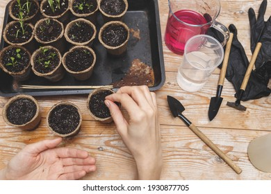 Hands Planting The Seeds Into The Peat Pots. Gardening, Planting at Home.