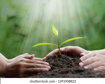 hands planting young tree on the black soil,save world concept