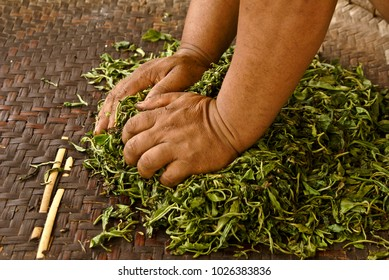 Hands pressing moisture from tea leaves on a woven mat, Xishuangbanna, Yunnan, China