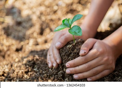 Hands protect trees, plant trees,  plant trees to reduce global warming, Forest conservation, World Environment Day.