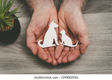 Hands protecting a dog and a cat; symbol of pet insurance
