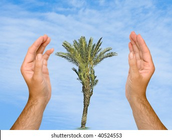 Hands protecting palm