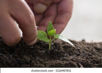 hands protecting young plant, life and ecology concept