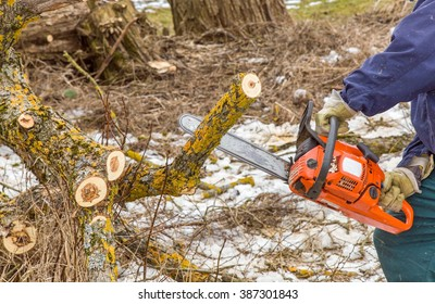 Hands in protective gloves holding power saw and making log fire wood in the forest. In early spring preparation of firewood for autumn and winter. Renewable resource of energy.
