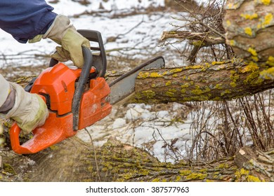 Hands in protective gloves holding power saw and making log fire wood in the yard. In early spring preparation of firewood for autumn and winter. Renewable resource of energy.