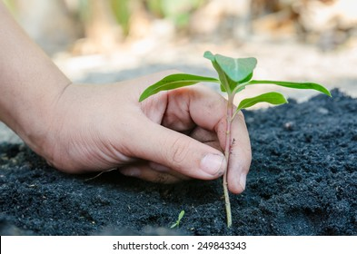 Hands putting a new plant into the earth.