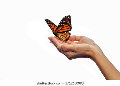 Hände, die Schmetterlinge freisetzen, einzeln auf weißem Hintergrund.