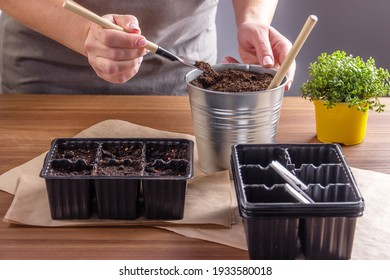 Women's hands scoop up the earth. Container for seedlings with soil and seeds. Gardening, the spring planting at home.