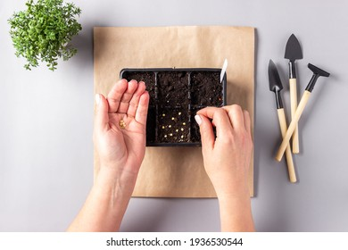 Women's hands seeding the seeds into container with earth indoors. Hobbies, Gardening, the spring planting at home.