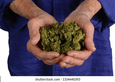 In The Hands of a Senior, Medical Grade Indica marihuana