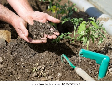 hands with soil in the garden