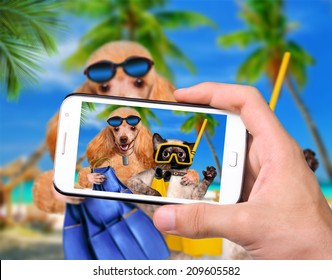 Hands taking photo dog with cat diver with smartphone
