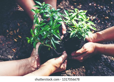 Hands team work and family holding young plants on the  arid soil and cracked ground or dead soil  in the nature park of growth of plant for reduce global warming.  Ecology concept.
