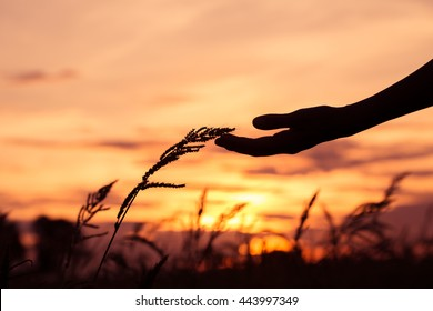 Hands touch the grass at sunset.