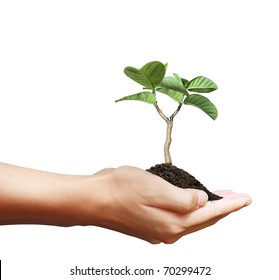 Hands with a tree