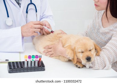 Hands of veterinarian giving injection to little golden retriever at vet clinic