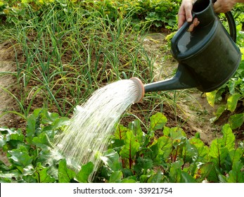 hands with watering can in action