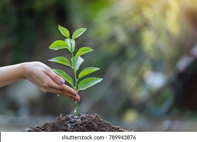 Hands are watering the seedlings in the natural background.