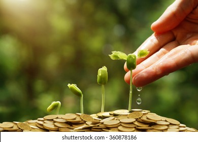 Hands watering young baby plants growing in germination sequence on golden coins / Green business concept / Business ethics / Corporate social responsibility