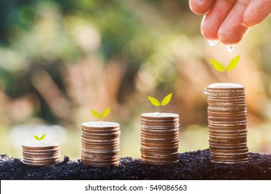 Hands watering young plants growing in germination sequence on golden coins , business concept
