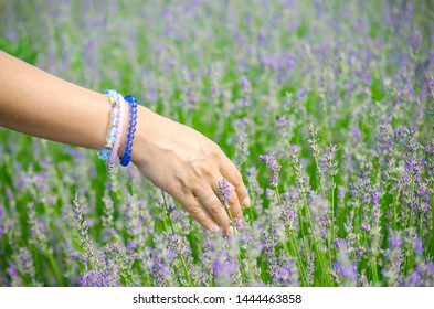 Hands of white young woman close up. Female hand in bracelets of gems over lavender. Lavender flowers, lavender field on farm, harvest. Selective focus image, copy space.