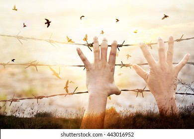 Hands of wire prison with bird flying on sunset sky background