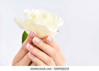 Hands of a woman with beautiful french manicure and white rose
