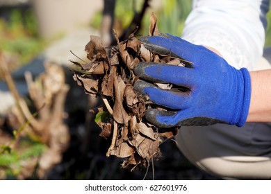 hands woman with blue gloves gardening in garden