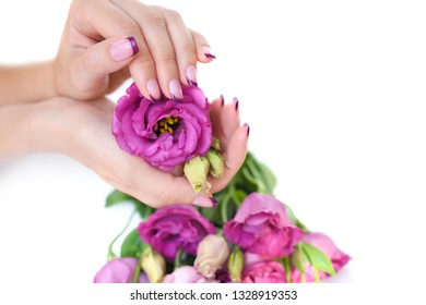 Hands of a woman with pink french manicure and flowers eustoma on a white background