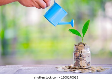 The hands of women holding watering can sprinkle coins and sprout on the growing business concept board, saving money, investing, making money for the future. And tree planting, showing the growth and