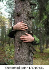 Hands wrapped around a spruce tree hugging, environmental concept