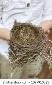 The hands of a young boy child are holding a fallen bird's nest, which was made by an American Robin.