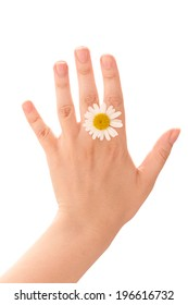 Hands of young woman with one chamomile flower head.