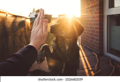 handshake between cute australian shepherd mix and person in front of beautiful sunset shining on paw and hand with copy space