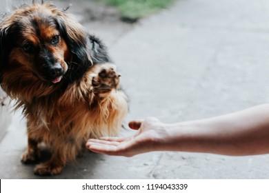 handshake between man and pretty puppy- High Five - teamwork between man dog