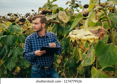 handsome agronomist holds tablet touch pad computer in the sunflower field and examining crops before harvesting. Agribusiness concept. agricultural engineer standing in a sunflower field.