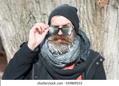 Handsome bearded man, hipster, with beard and moustache in black sunglasses, hat, scarf covered with white frost stands near tree on winter day outdoors on natural background
