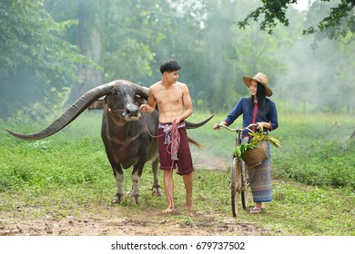 Handsome and beautiful woman thai traditional culture with buffalo,Thailand