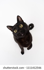 Handsome Black Cat on Light Background
