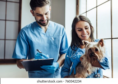 Handsome doctor veterinarian and his attractive assistant at vet clinic are examining little dog Yorkshire Terrier.