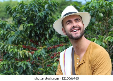 Handsome farmer in coffee plantation