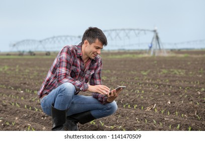 Handsome farmer with tablet and corn sprouts in field in springtime with irrigation system in background