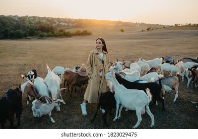 Handsome female shepherdess stands in a pasture among a herd of goats at sunset.