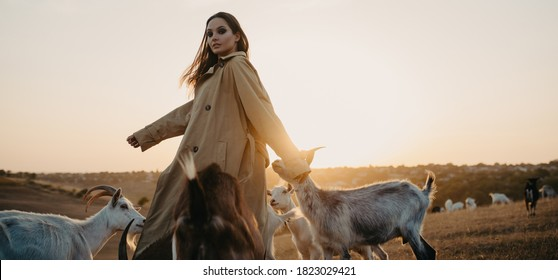 Handsome female shepherdess walks in a pasture among a herd of goats at sunset.