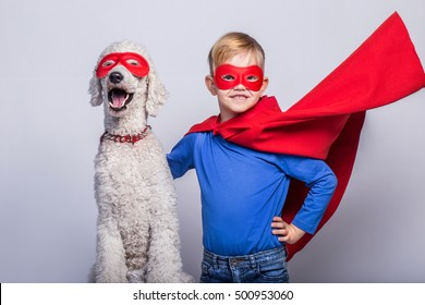 Handsome little superman with dog. Superhero. Royal Poodle. Studio portrait over white background