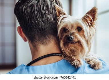 Handsome male doctor veterinarian at clinic with little dog Yorkshire Terrier.